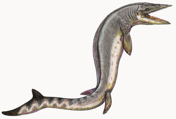 Taniwhasaurus