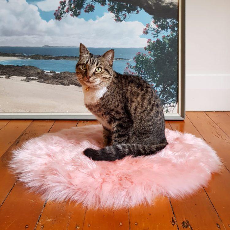 bed-cat-new-zealand-sheepskin-candyfloss-pink-1-768x768