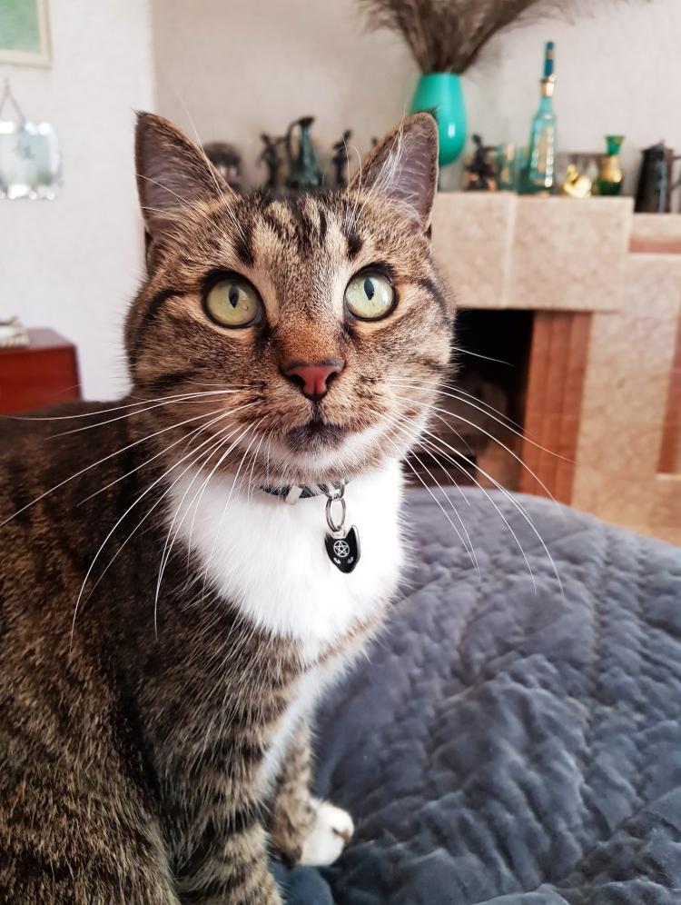 Suzi Q meowdelling Cat Coven Collar Charm